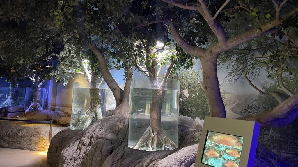 أكواريوم الشارقة- مربى الشارقة للأحياء المائية